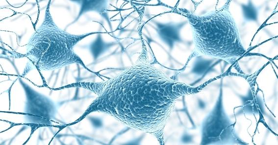 Brain power: Adding a few extra watts - Naturelicious.com